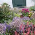 Stadt Moers sucht bunte Vorgärten