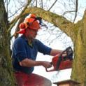 Emmericher Rat fällt Baumschutz-Begehren