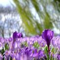 Fit in den Frühling mit der richtigen Ernährung